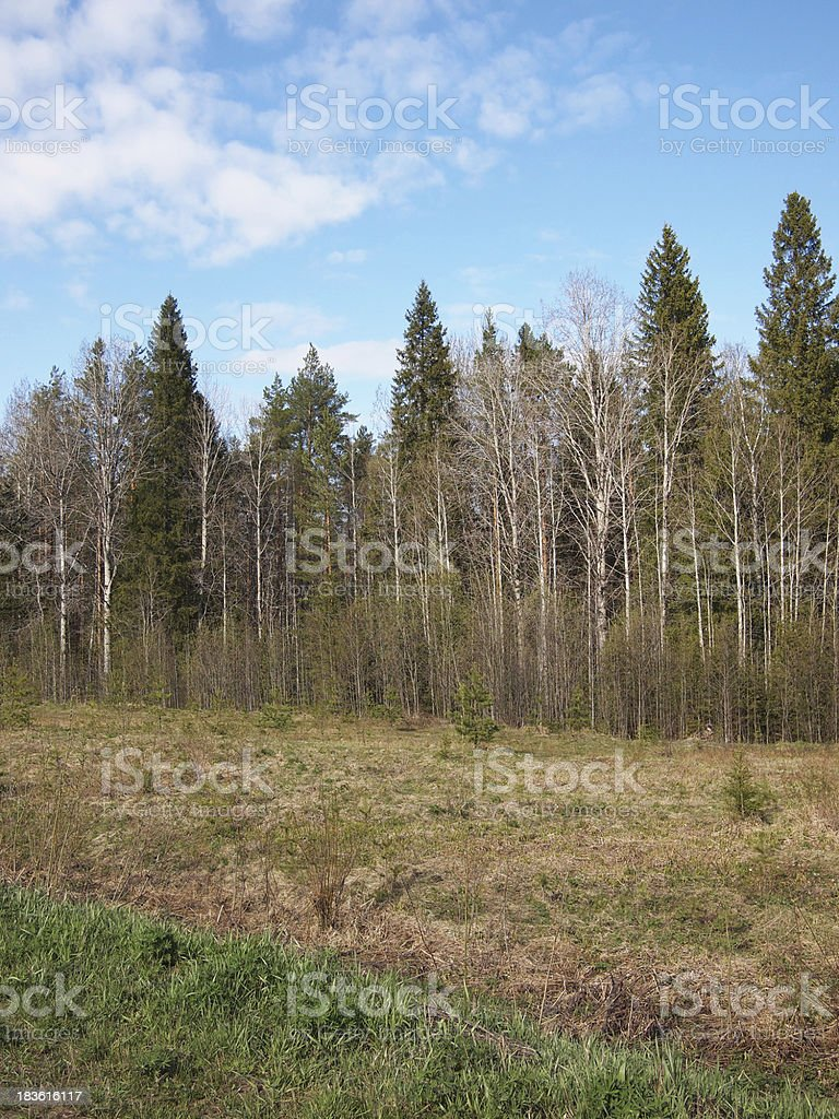 Forest Spring royalty-free stock photo