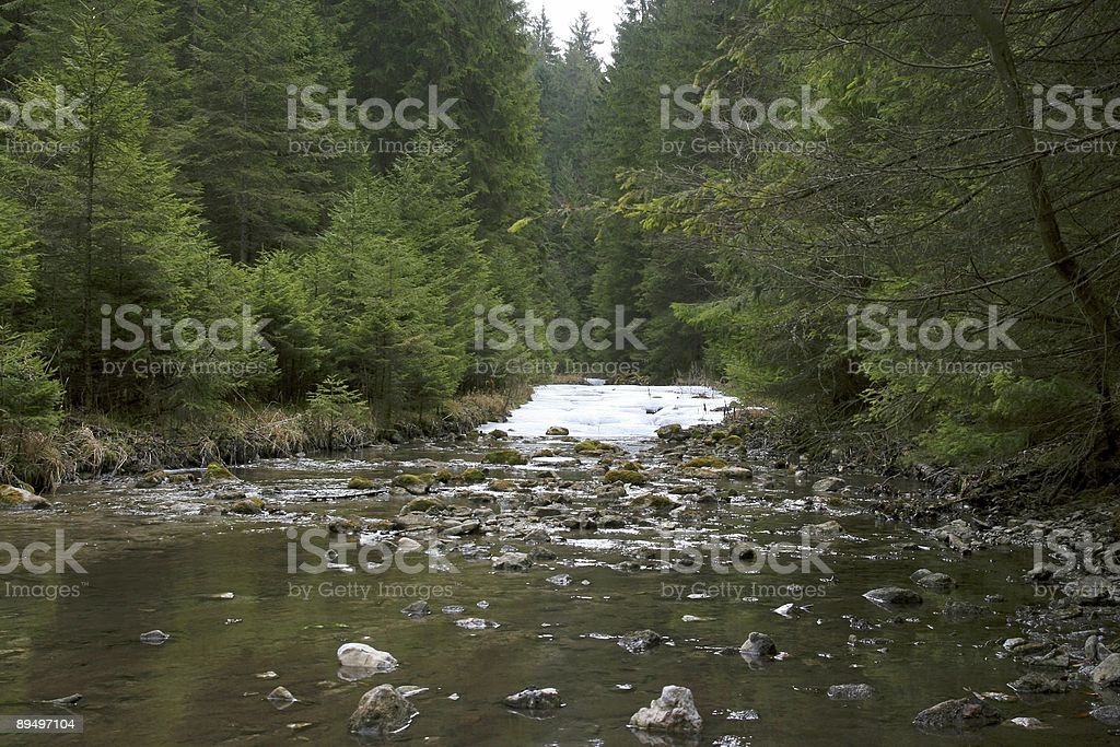Forest steam royalty-free stock photo