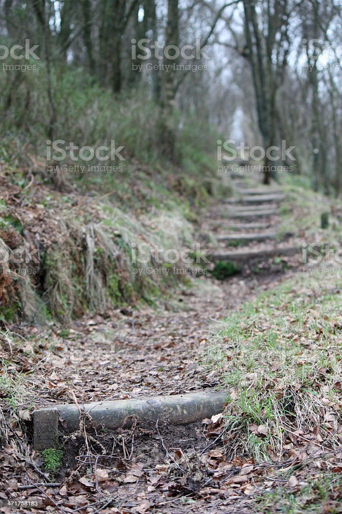 Bosque pasos foto de stock libre de derechos
