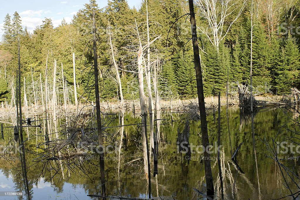 forest stillwater royalty-free stock photo