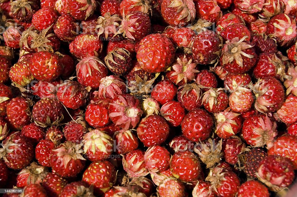 forest strawberries royalty-free stock photo