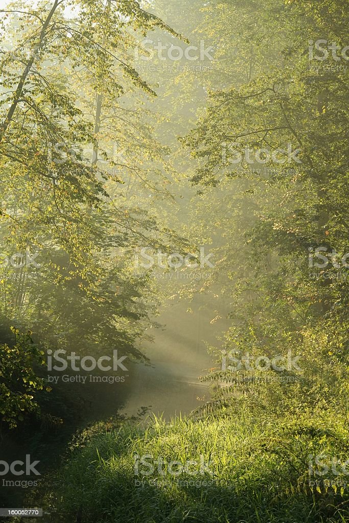 Forest stream at dawn royalty-free stock photo