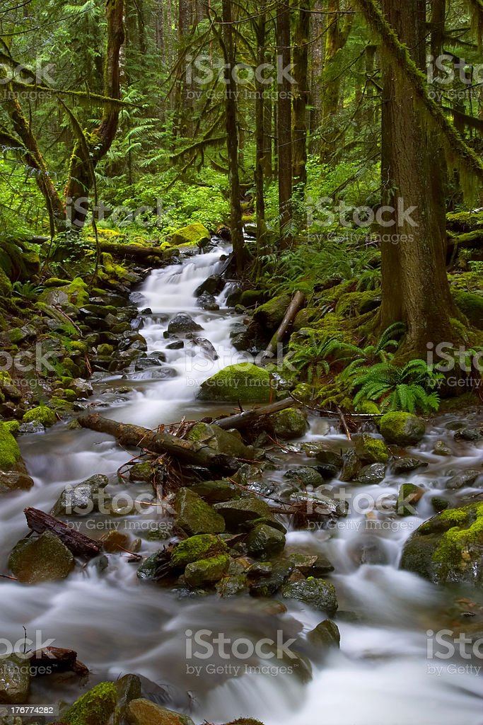 Forest Stream royalty-free stock photo