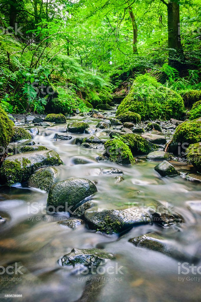 Forest stream running over mossy rocks stock photo