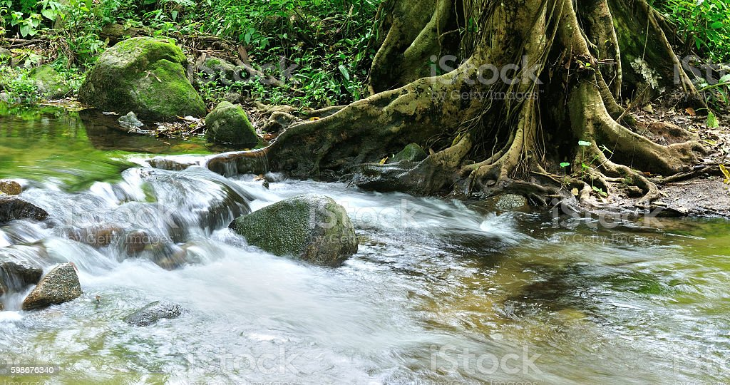 Forest stream, Tropical rainforest stock photo