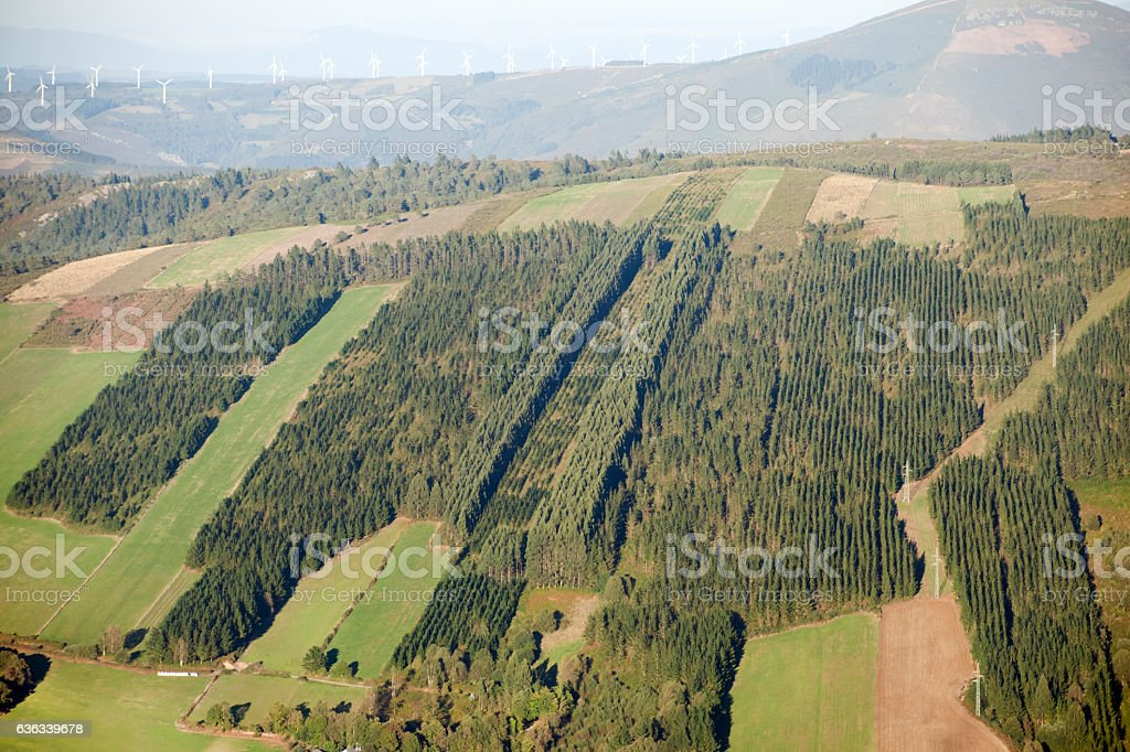 Forest stripes, eucaliptus rows and meadows. stock photo