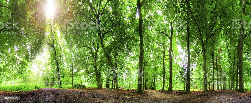 360 forest sun stock photo