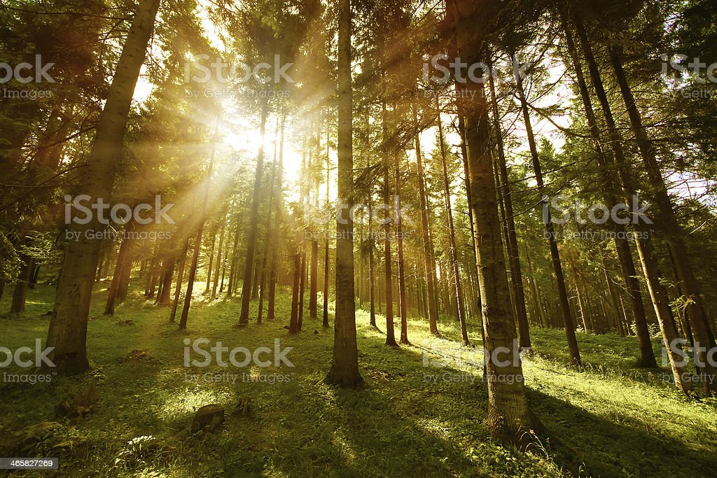 forest sunny stock photo