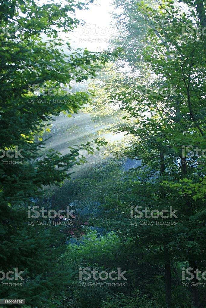 Forêt au soleil photo libre de droits