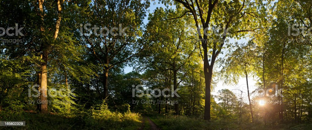Forest sunrise bright new day dawn panorama royalty-free stock photo