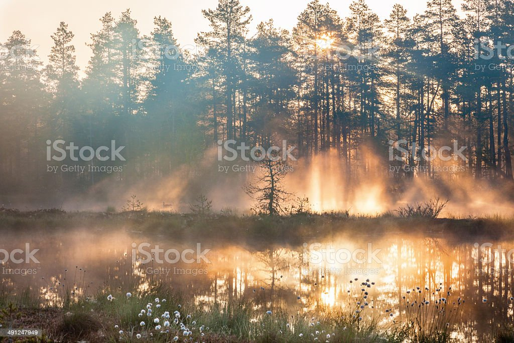 Forest sunrise stock photo