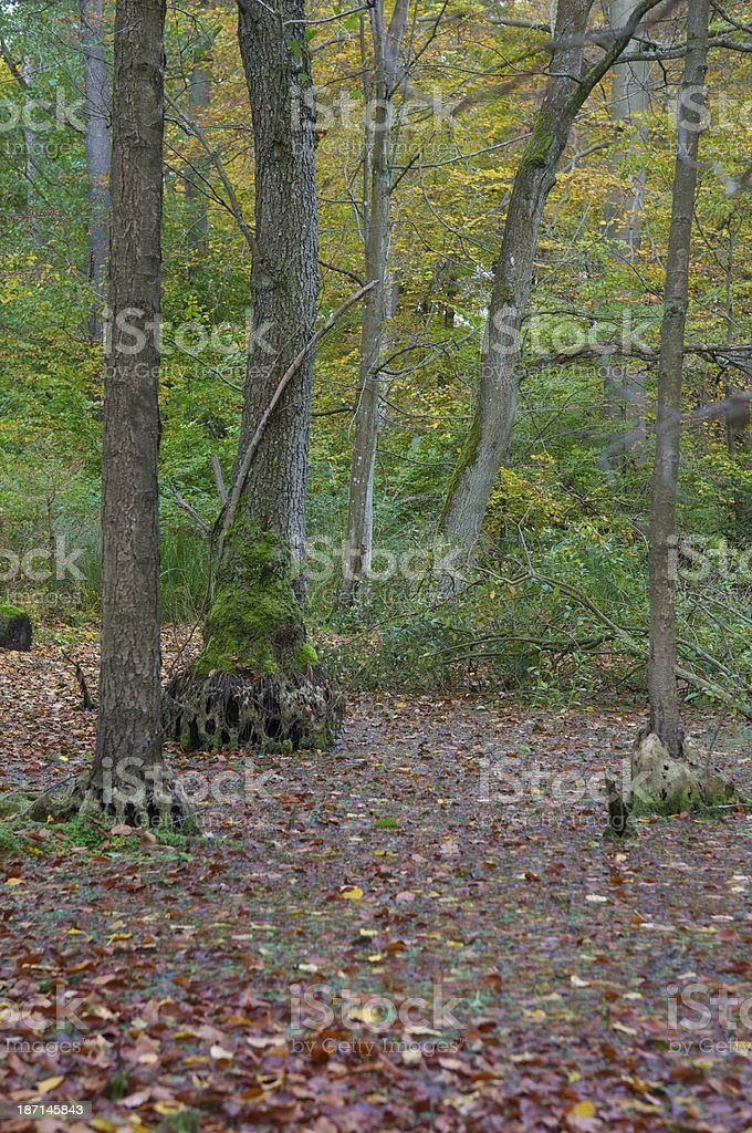 forest swamp stock photo