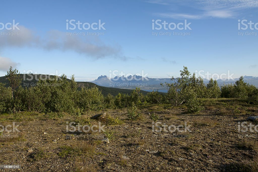 Forest taiga in North Norway stock photo