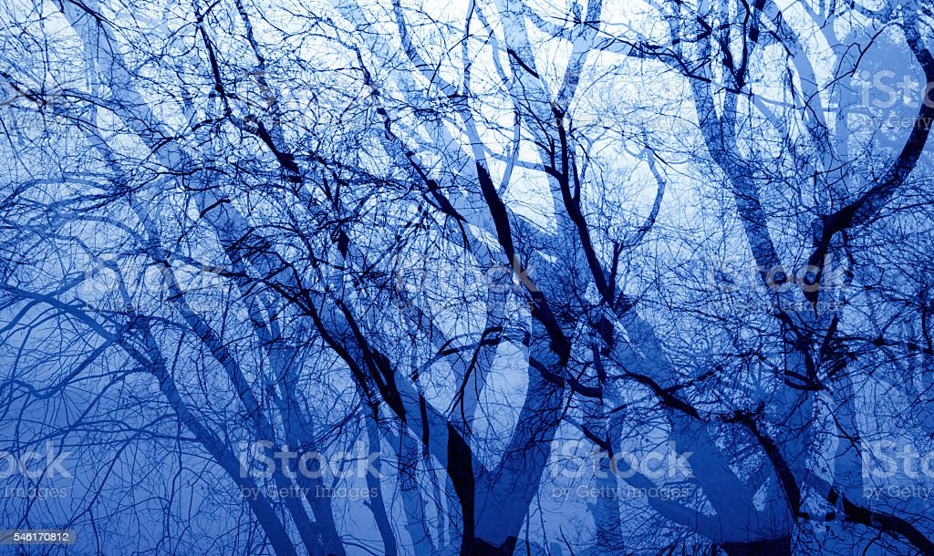Forest take multiple exposure stock photo