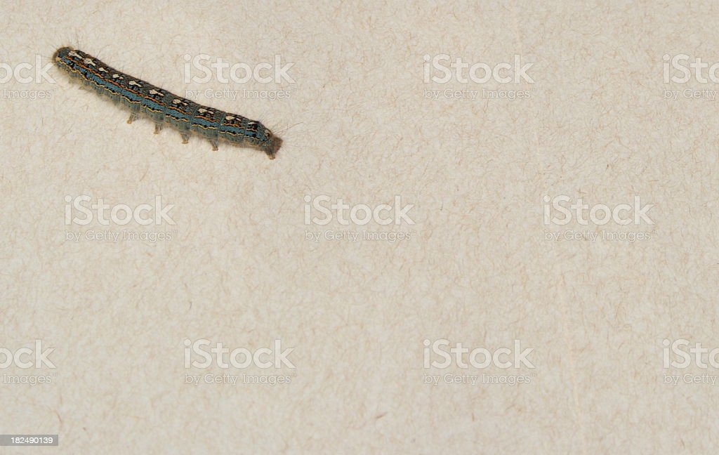forest tent caterpillers on spackled background stock photo