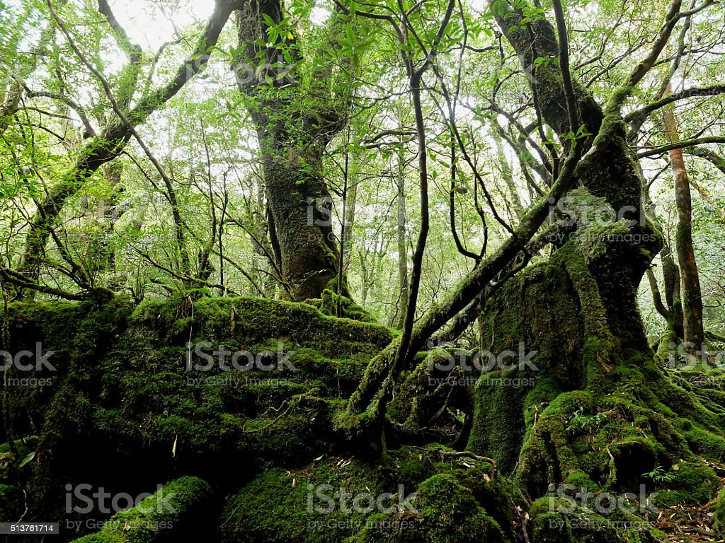Forest that was cut down in the Edo era stock photo