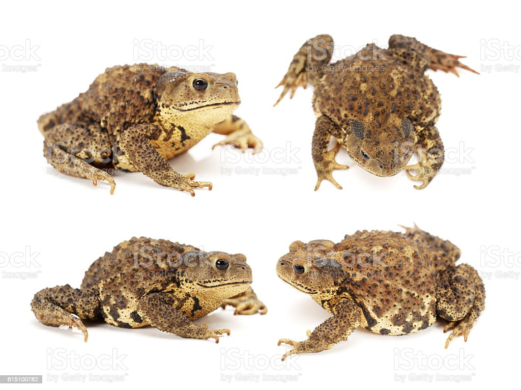 Forest toad stock photo
