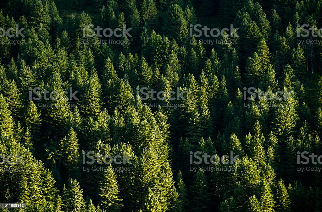 forest top view stock photo