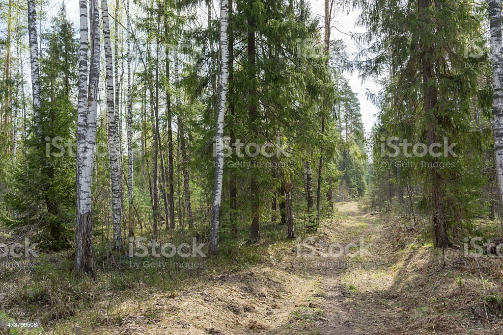 forest track at spring time stock photo