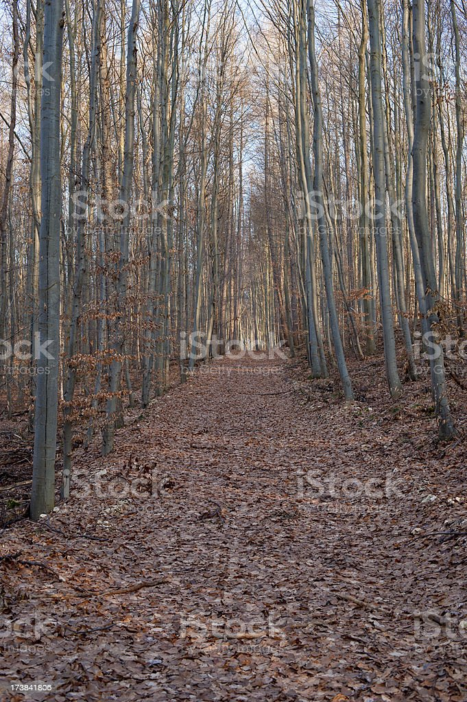 Forest track in autumn stock photo