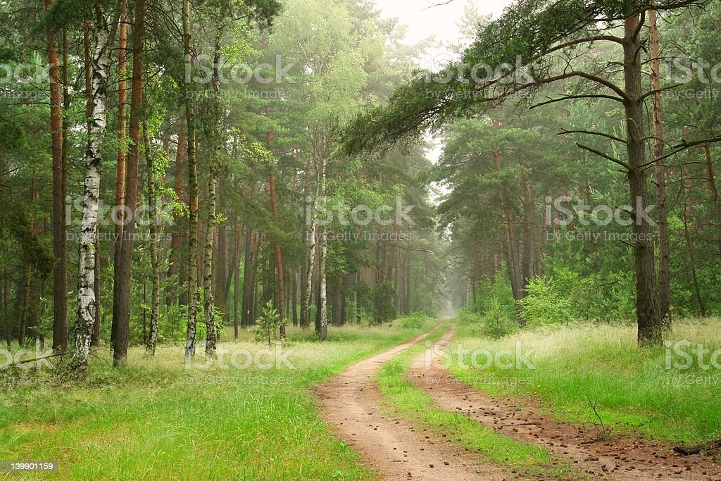 Forest Track royalty-free stock photo