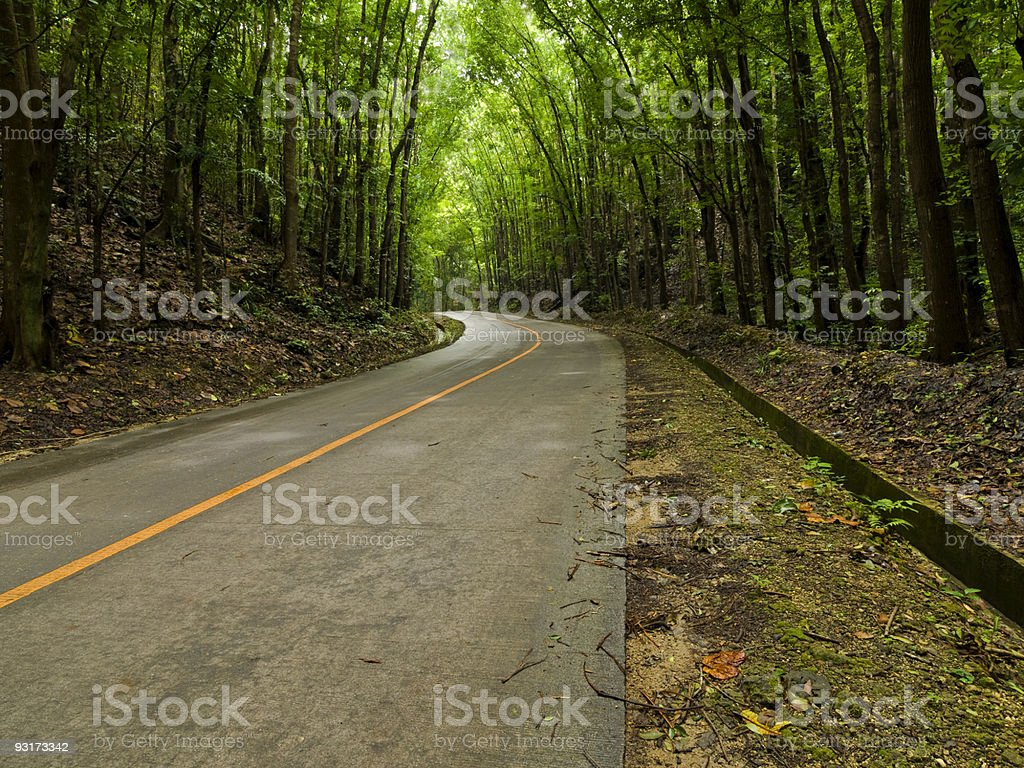 Forest track stock photo