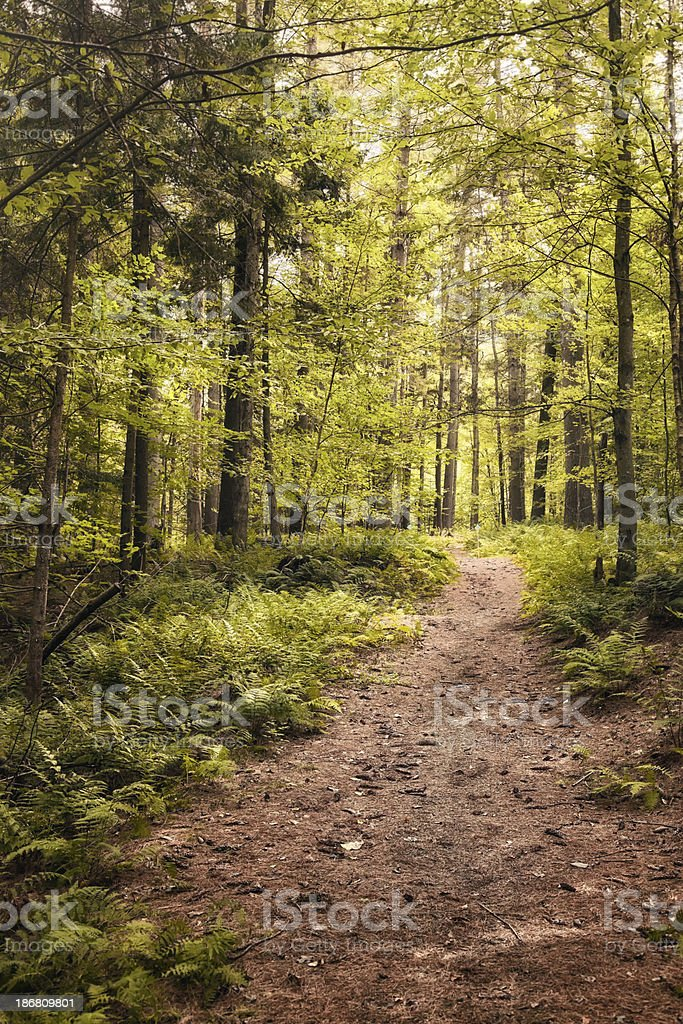 Forest trail background vertical royalty-free stock photo