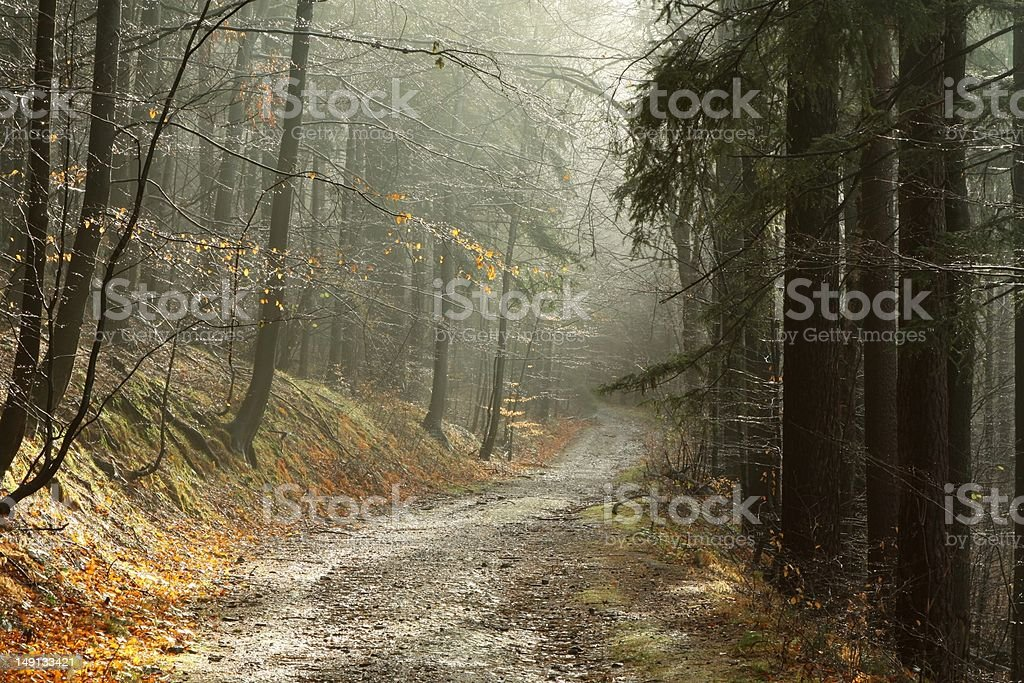Forest trail in the fog royalty-free stock photo