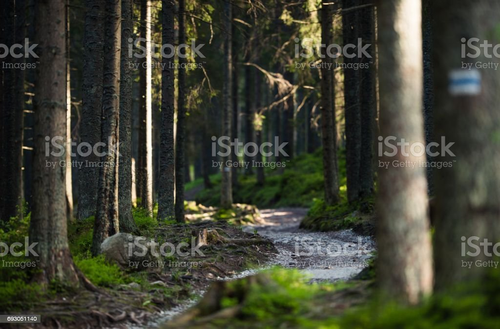 Forest Trail Path stock photo