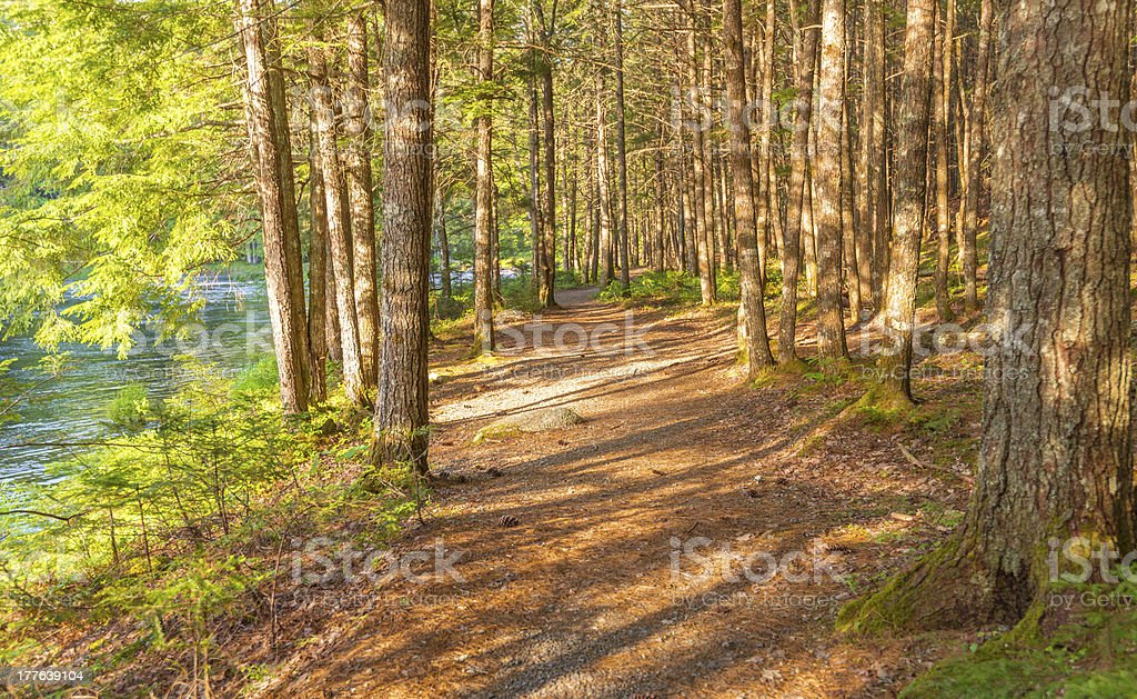Forest Trail stock photo