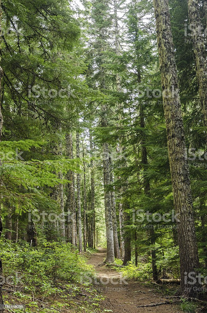 Forest Trail royalty-free stock photo
