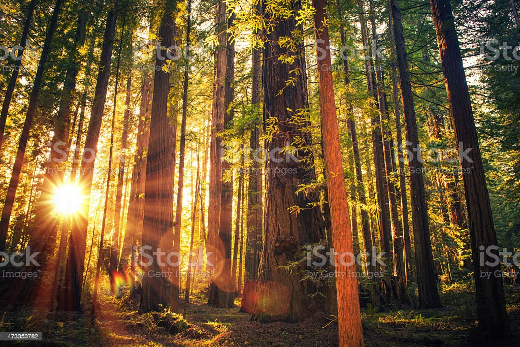 Forest Trail Sunset stock photo