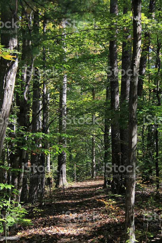 Forest trails stock photo