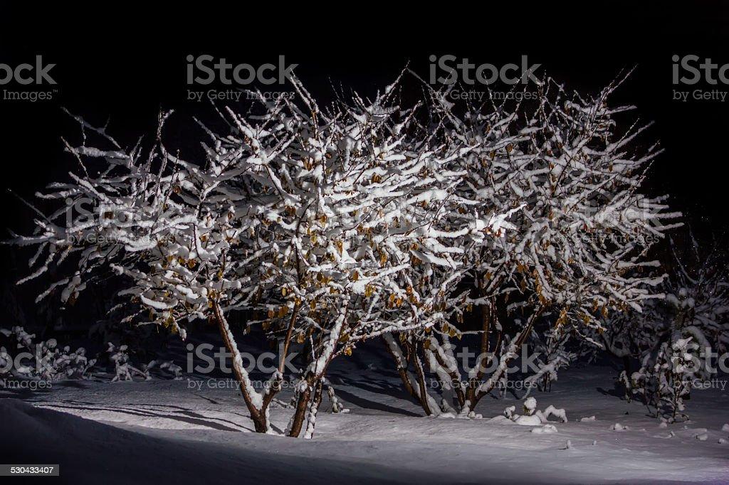 Árbol en el bosque de nieve foto de stock libre de derechos