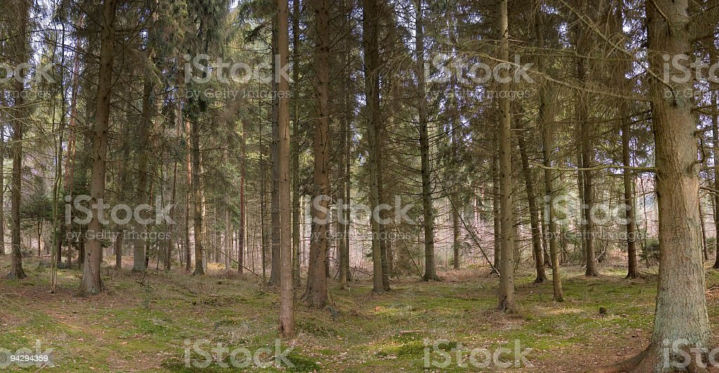 Forest tree panorama royalty-free stock photo