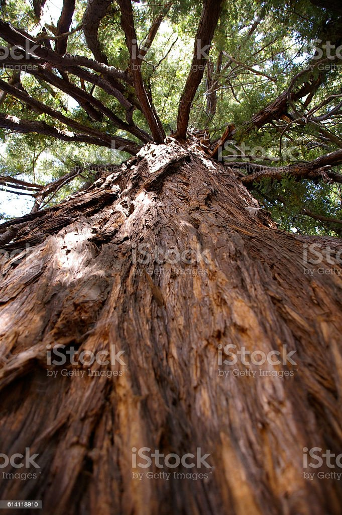 Forest tree stock photo