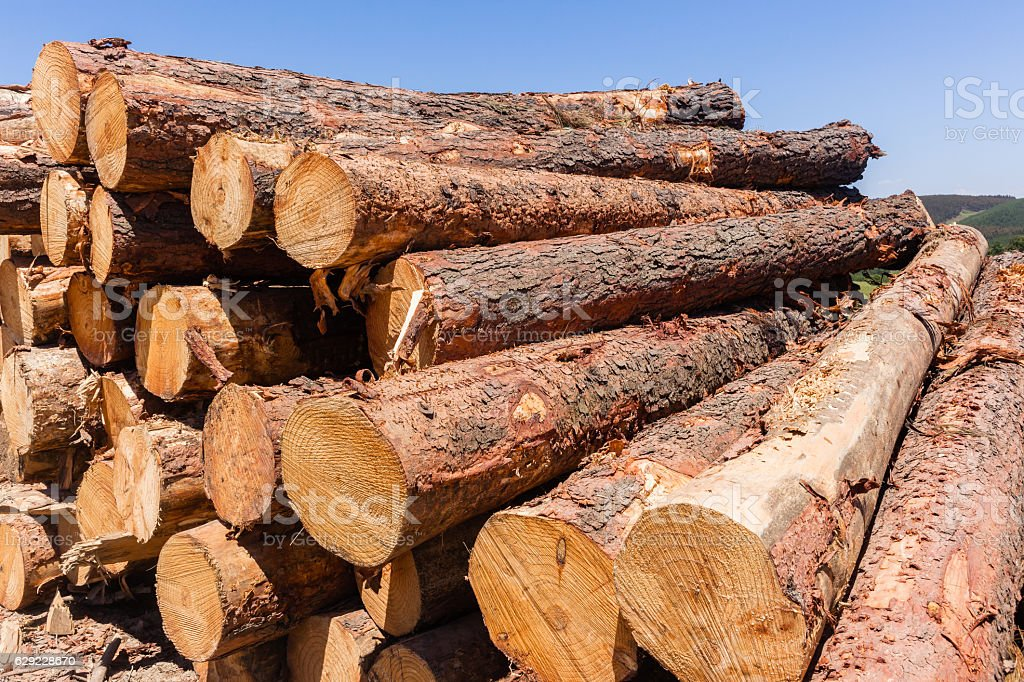 Forest Trees Logs Stack stock photo