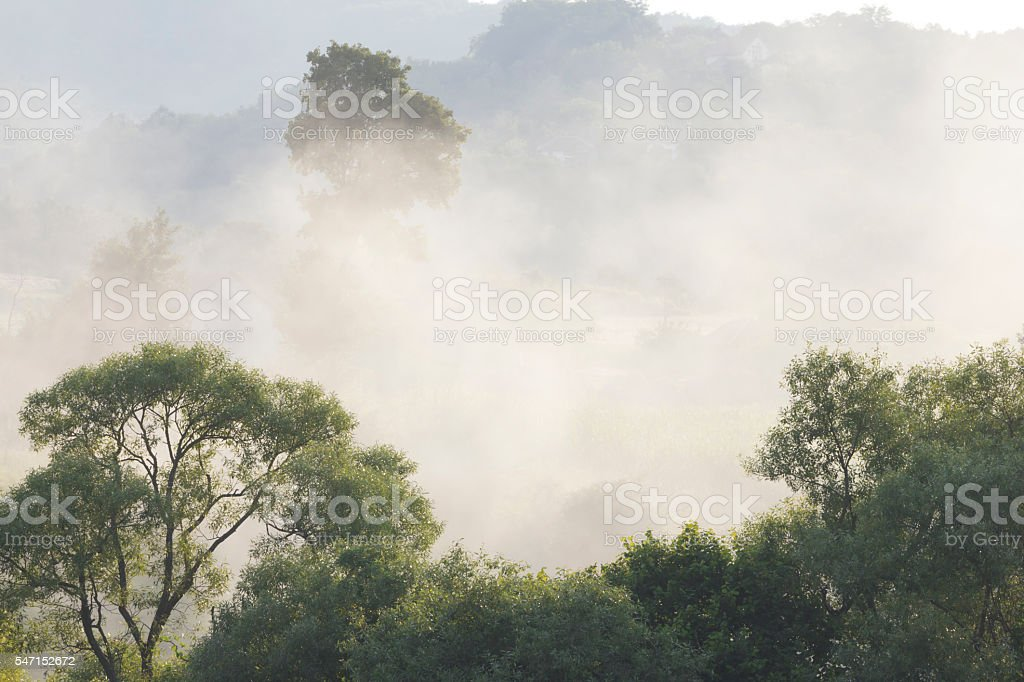Forest treetops in smoke from summer wildfire stock photo