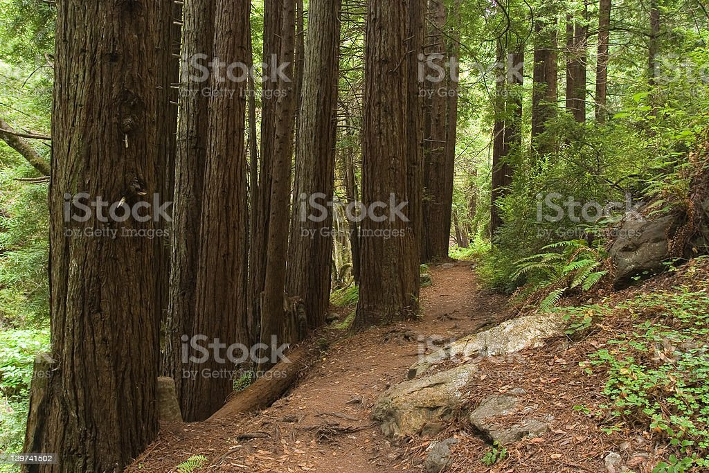 Forest trial royalty-free stock photo
