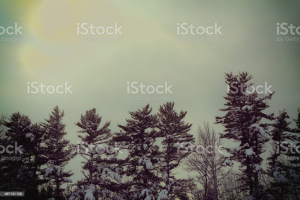 Forest under the Sun royalty-free stock photo