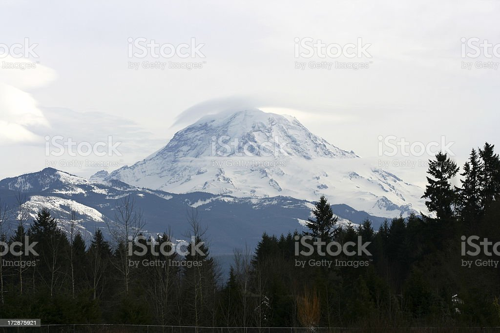 Forest view of blue toned Mt Rainier royalty-free stock photo