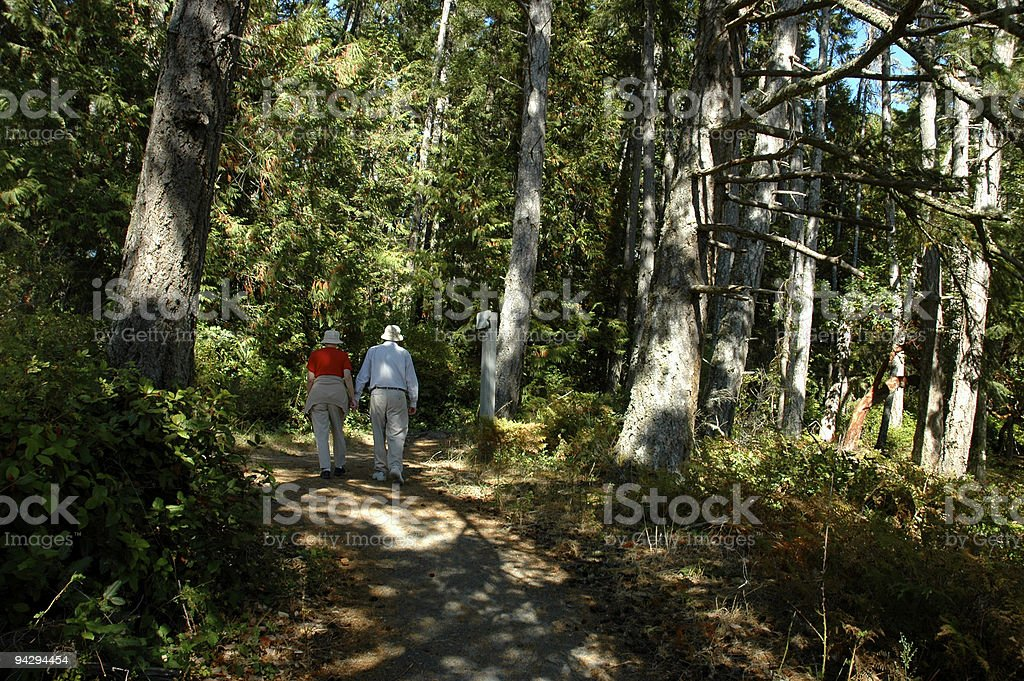 Forest walk royalty-free stock photo