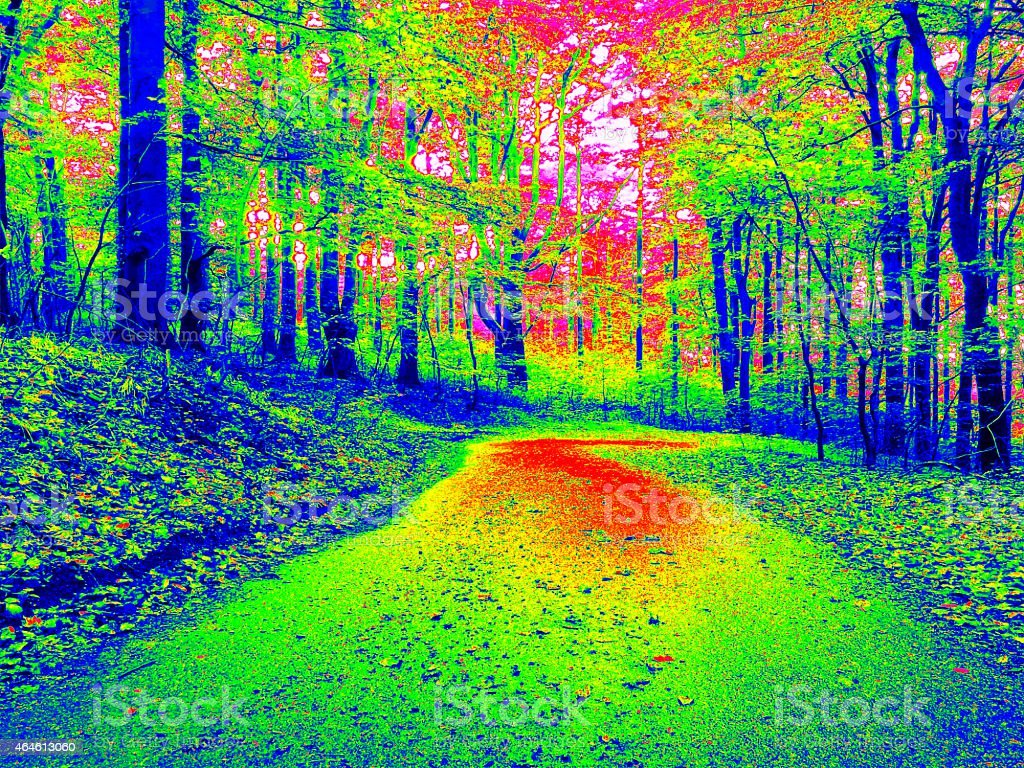 Forest way  in infrared photo. Amazing thermography. stock photo