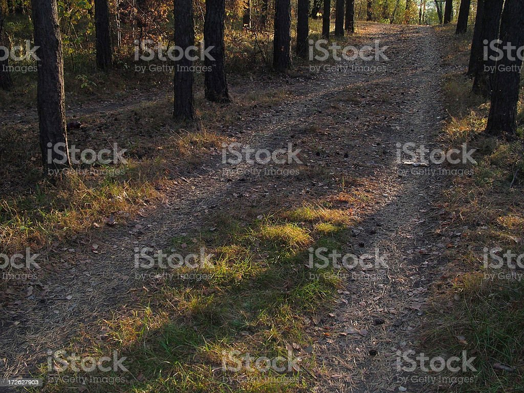 Forest way stock photo