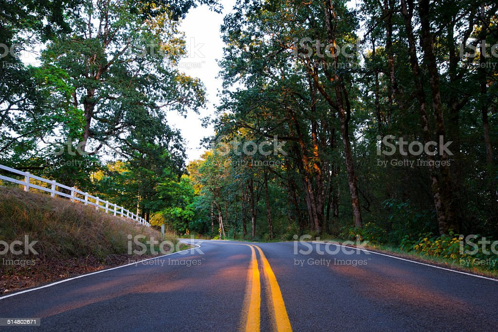 Forest winding road surrounded by wildlife stock photo