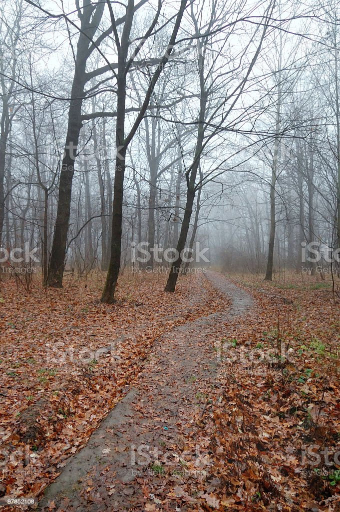 Forest with blue fog royalty-free stock photo