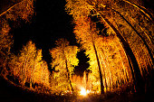 Forest with bonfire at night starry sky