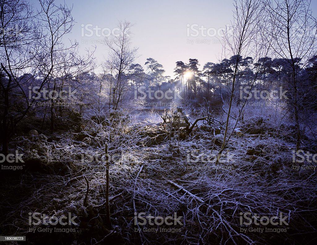 Forest with branches covered in hoarfrost. stock photo