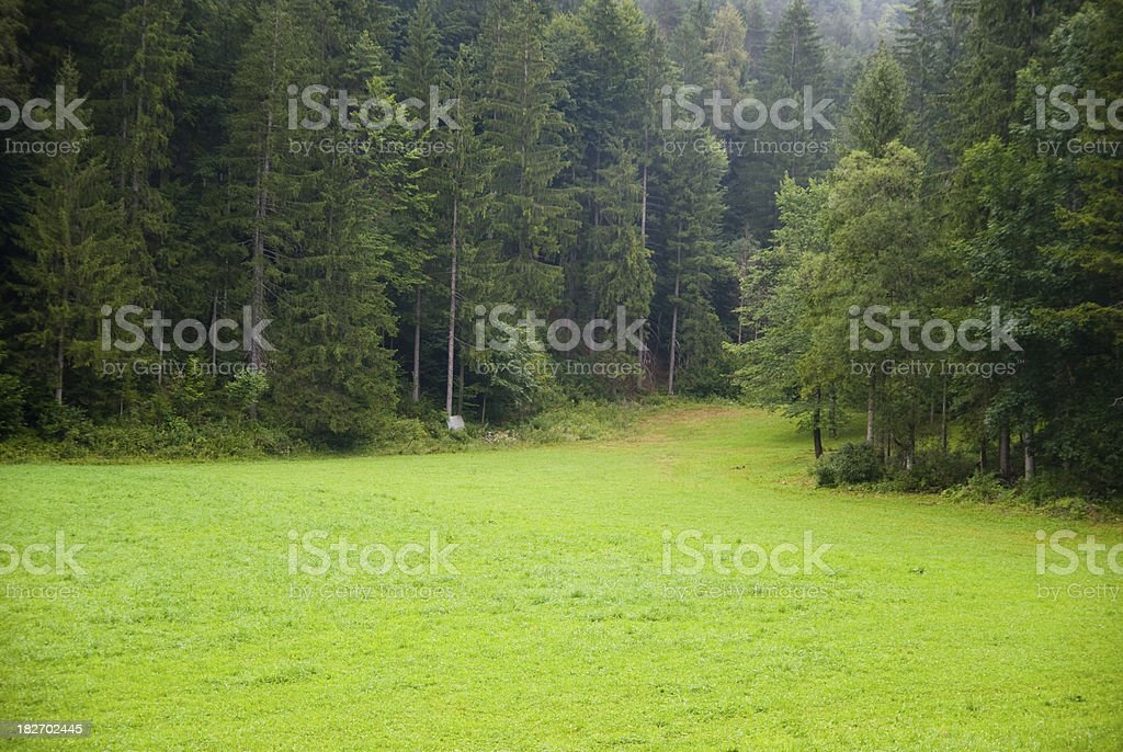Forest With Green Trees and Grass stock photo