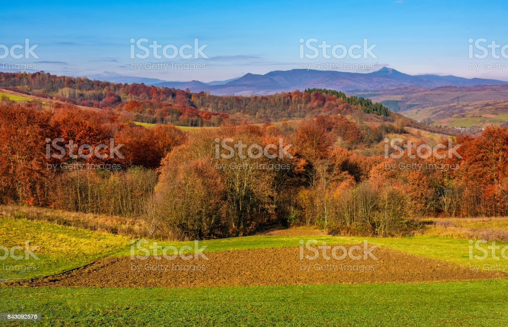 forest with red foliage on hills in countryside stock photo